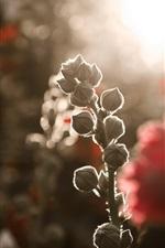 Flower buds, glare background