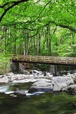 Preview iPhone wallpaper Forest, creek, stones, bridge, nature