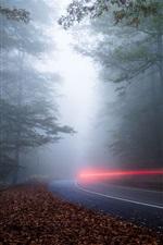 Forest, road, light, fog