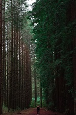 Preview iPhone wallpaper Forest, trees, path, man