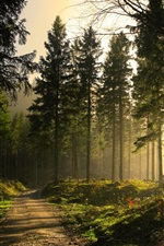 Preview iPhone wallpaper Forest, trees, path, sun rays, morning