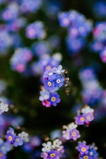 Preview iPhone wallpaper Forget-me-not flowers background, blurry