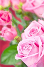 Preview iPhone wallpaper Fresh pink roses, beautiful flowers