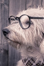 Preview iPhone wallpaper Funny animals, dog, glasses