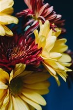 iPhone обои Гербера, желтые и красные цветы, букет