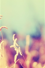 Preview iPhone wallpaper Grass, nature, blurry background