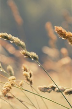 Grass, water drops, blurry background