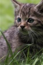 Preview iPhone wallpaper Gray kitten, lovely, grass