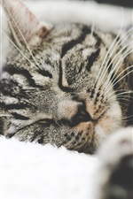 Preview iPhone wallpaper Gray striped kitten sleeping