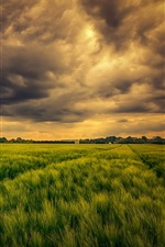 iPhone fondos de pantalla Campo verde, las nubes, el cielo, la naturaleza