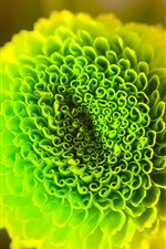 Preview iPhone wallpaper Green flower macro photography