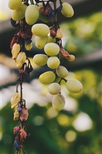 Preview iPhone wallpaper Green grapes, fruit, vine