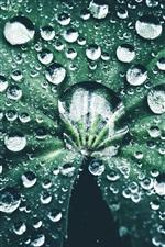 Folha verde, muitas gotas de água