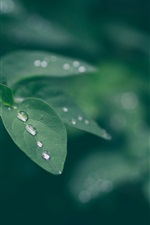 Preview iPhone wallpaper Green leaves, water drops, bokeh, nature