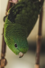 Preview iPhone wallpaper Green parrot in cage