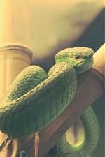 iPhone обои Зеленая змея, рептилия