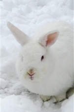Preview iPhone wallpaper Hare, white rabbit, snow