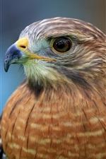 Preview iPhone wallpaper Hawk, face, beak, eyes