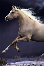 Preview iPhone wallpaper Horse running, jump, speed