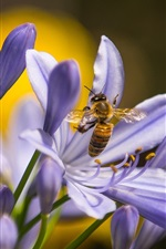 Preview iPhone wallpaper Insect, bee, blue orchid