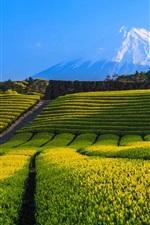 Vorschau des iPhone Hintergrundbilder Japan, Fuji Berg, Teeplantage