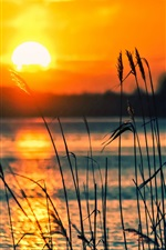 Preview iPhone wallpaper Lake, reeds, sunset