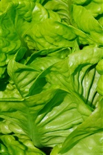 Preview iPhone wallpaper Lettuce leaves close-up, vegetable