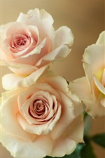 Preview iPhone wallpaper Light pink roses