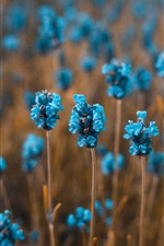Preview iPhone wallpaper Little blue flowers field