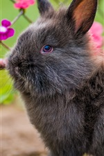 Preview iPhone wallpaper Lovely gray rabbit, furry pet
