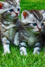 Preview iPhone wallpaper Lovely kittens, grass