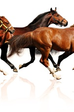 Preview iPhone wallpaper Many horses running, white background
