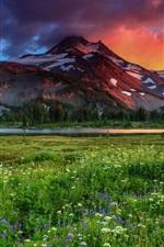 iPhone обои Луг, горы, полевые цветы, деревья, сумерки