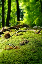 Moss, grass, forest, nature scenery