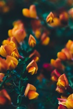 Preview iPhone wallpaper Orange flowers, twigs, blurry background