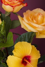 Preview iPhone wallpaper Orange roses and hibiscus flowers