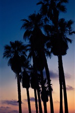 Palm trees, night
