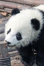 Preview iPhone wallpaper Panda baby