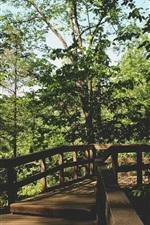 Park, trees, wood bridge
