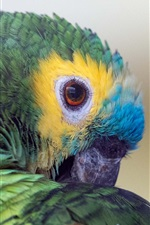 Preview iPhone wallpaper Parrot, colors feathers, beak, eyes