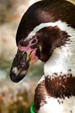 iPhone fondos de pantalla Pingüino, pico, fotografía de aves