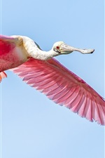 Preview iPhone wallpaper Pink wings bird flying in sky