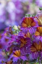 Flores digitais digitais
