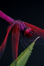 Preview iPhone wallpaper Red dragonfly, leaf, black background