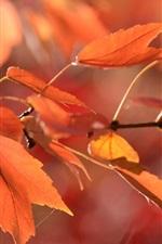 Folhas vermelhas, galhos, outono