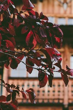 Red leaves, twigs, house