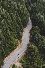 Preview iPhone wallpaper Road, forest, trees, car, top view