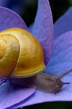 Preview iPhone wallpaper Snail, blue flowers