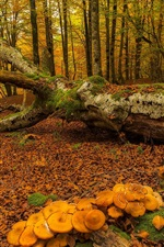 Spain, Basque Country, autumn, trees, moss, mushrooms