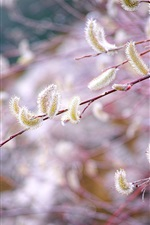 Preview iPhone wallpaper Spring, twigs, buds